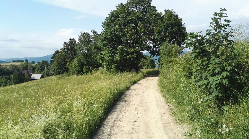 Droga w stronę Piwnicznej Zdrój