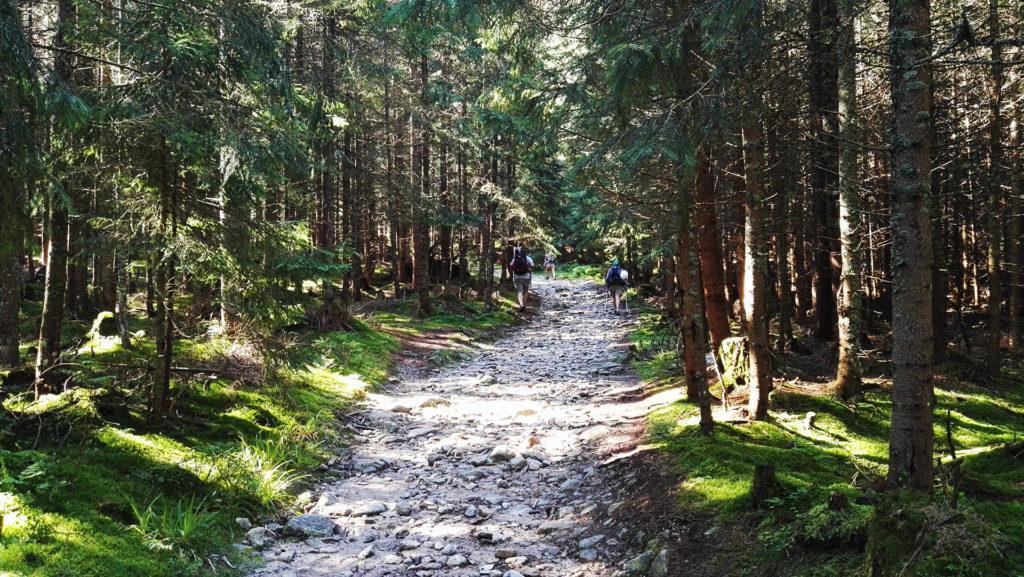 Rohacze. Las na początku Wyżniej Doliny Chochołowskiej