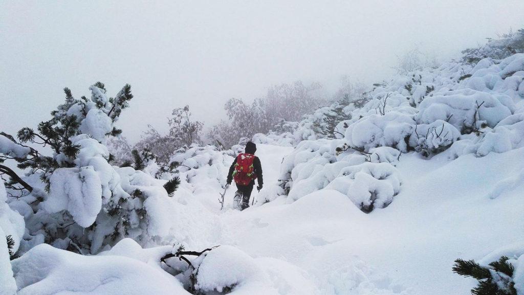 Szlak wśród kosodrzewiny w trakcie wejścia na Trzydniowiański Wierch