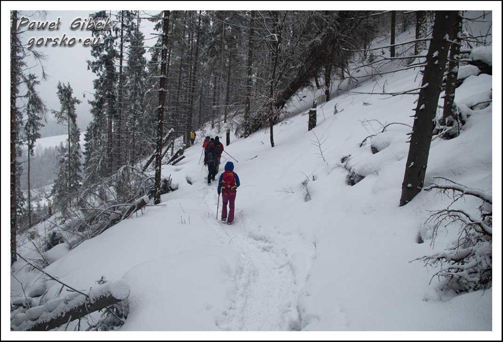 Wysoka w Pieninach. Niebieski szlak graniczny
