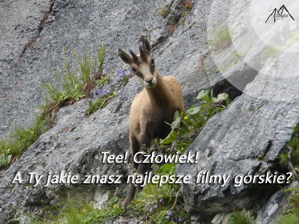 Najlepsze filmy górskie