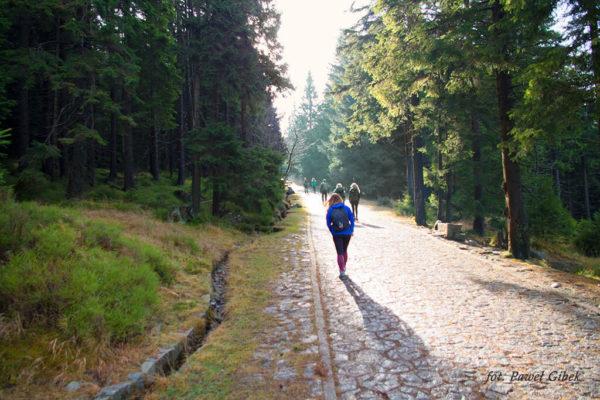Szlak przez Śnieżne Kotły Szrenica Wodospad Kamieńczyka. Fragment trasy pomiędzy Wodospadem Kamieńczyka a Szrenicą