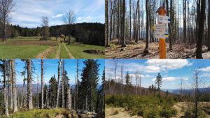 Pierwszy wiosenny trekking – Babia Góra i Beskid Żywiecki
