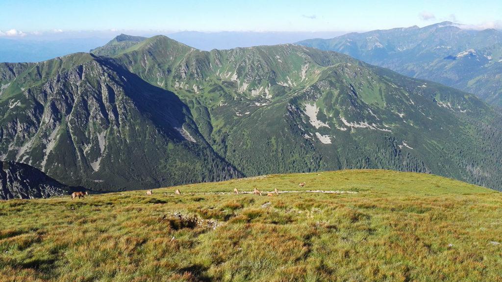 Widok ze szlaku na Świnicę od strony Kasprowego Wierchu