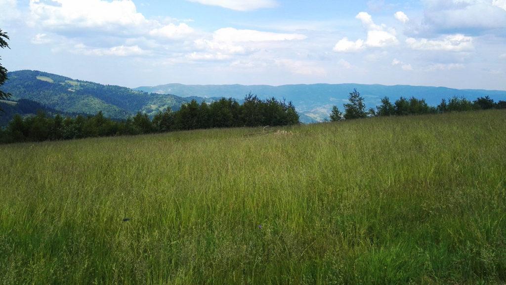 Szlak z Obidzy w stronę Eliaszówki