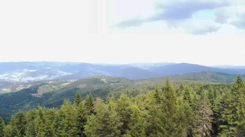 Widok z wieży widokowej na Eliaszówce