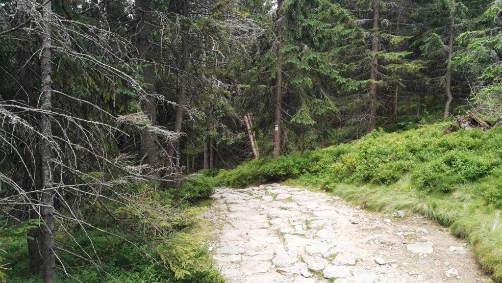 Zejście do Doliny Chochołowskiej