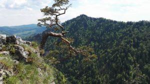 Trekking w pięknych Pieninach – Trzy Korony, Sokolica i Przełom Dunacja