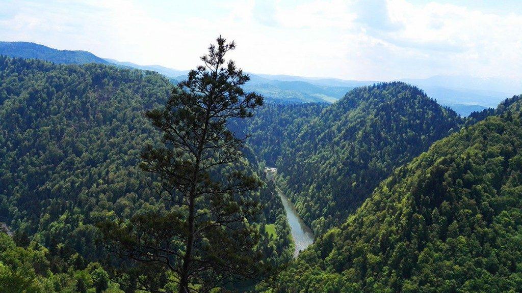 Pieniny Sokolica. Widok ze szlaku pomiędzy Trzema Koronami a Sokolicą