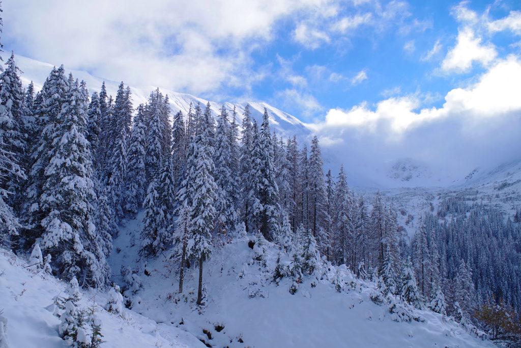 Zejście z Trzydniowiańskiego Wierchu w Tatrach Zachodnich