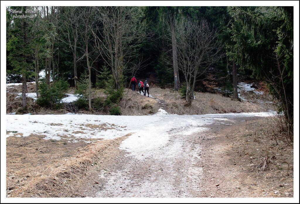 Szlak na Waligórę. Żółty szlak wchodzi głębiej w las