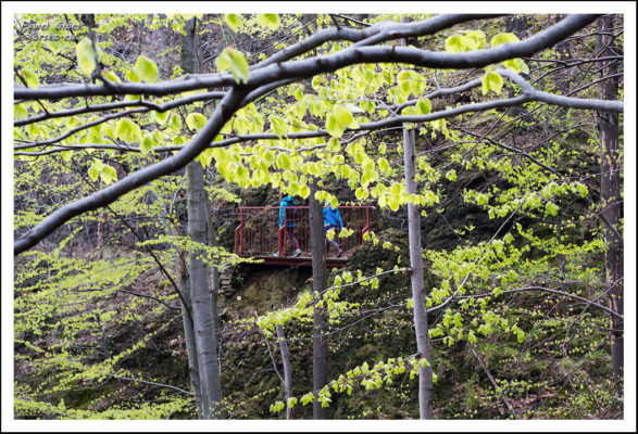 Ścieżka-prowadzi-stromym-zboczem-i-po-licznych-mostkach-1