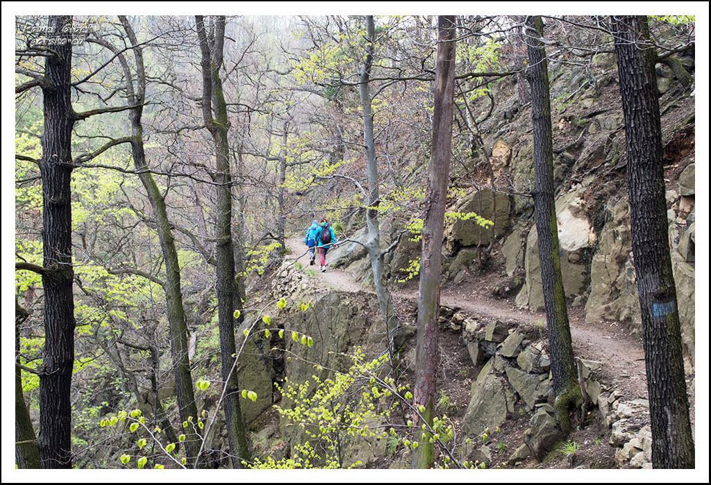Ścieżka-prowadzi-stromym-zboczem-i-po-licznych-mostkach-4