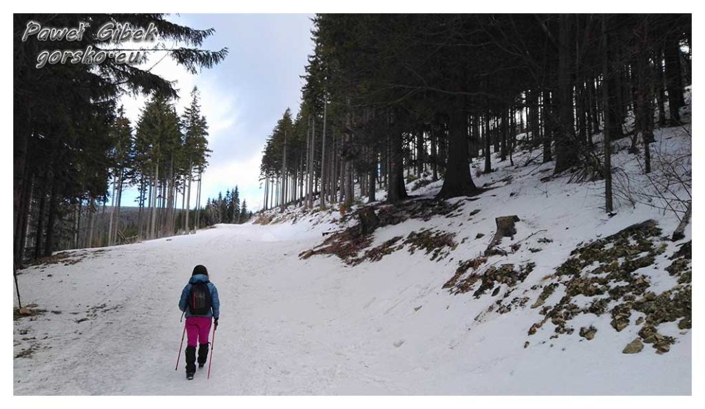 Śnieżnik-zimą.-Skręcamy-w-prawo-i-znów-wchodzimy-leśną-ścieżkę