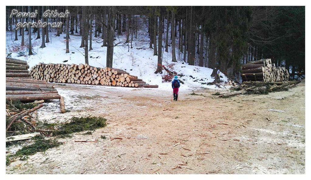 Śnieżnik-zimą.-Szlak-wprowadza-głębiej-w-las