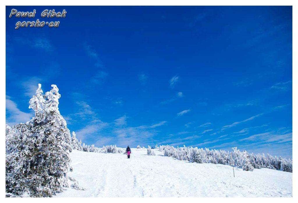 Śnieżnik-zimą.-W-drodze-na-szczyt
