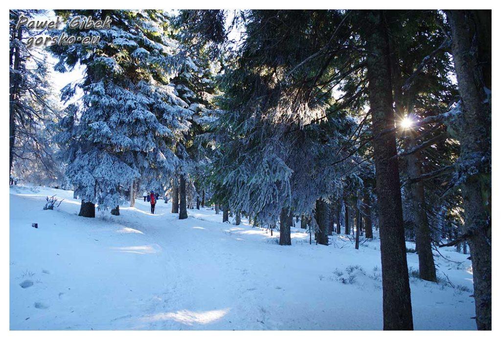 Śnieżnik-zimą.-W-kierunku-szczytu