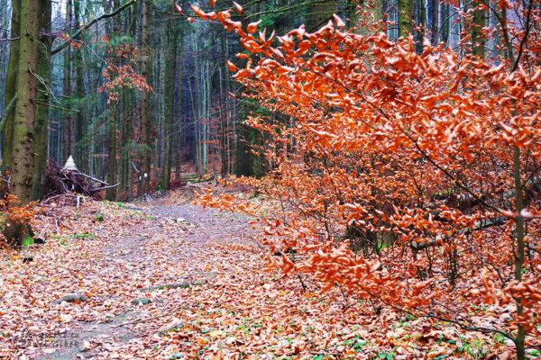 Początkowo-trasa-prowadzi-leśną-ścieżką