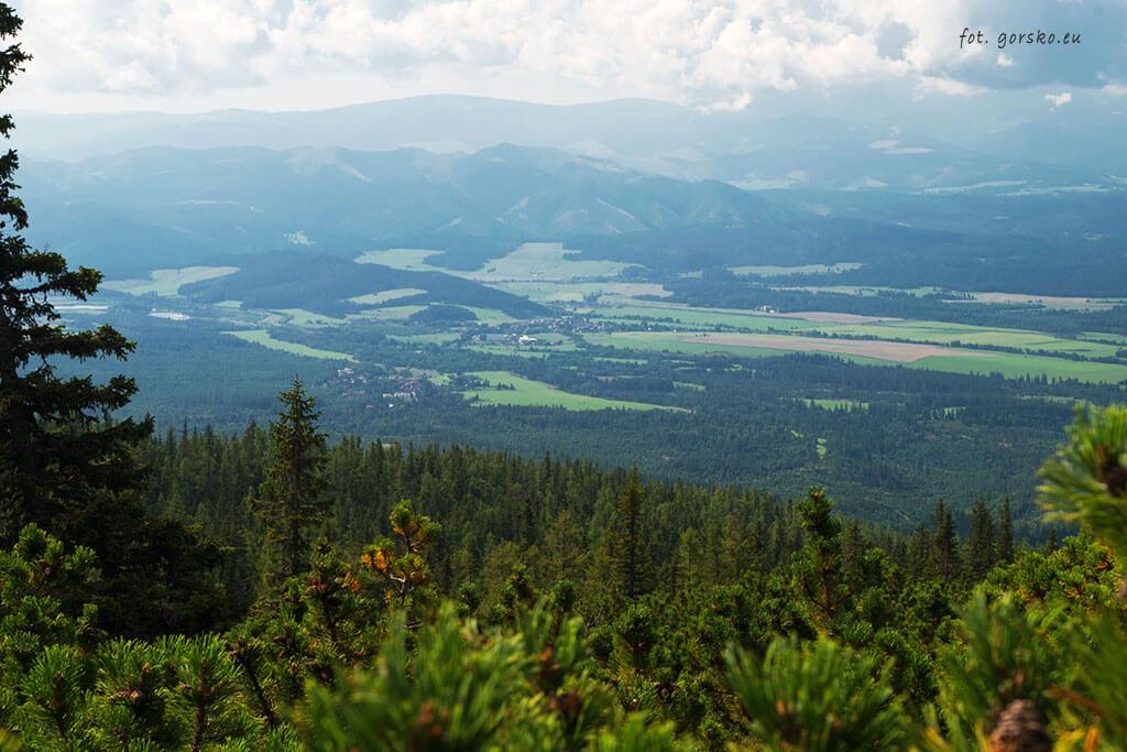Żółty-szlak-Wyżnie-Hagi-widok-ponad-granicą-lasu