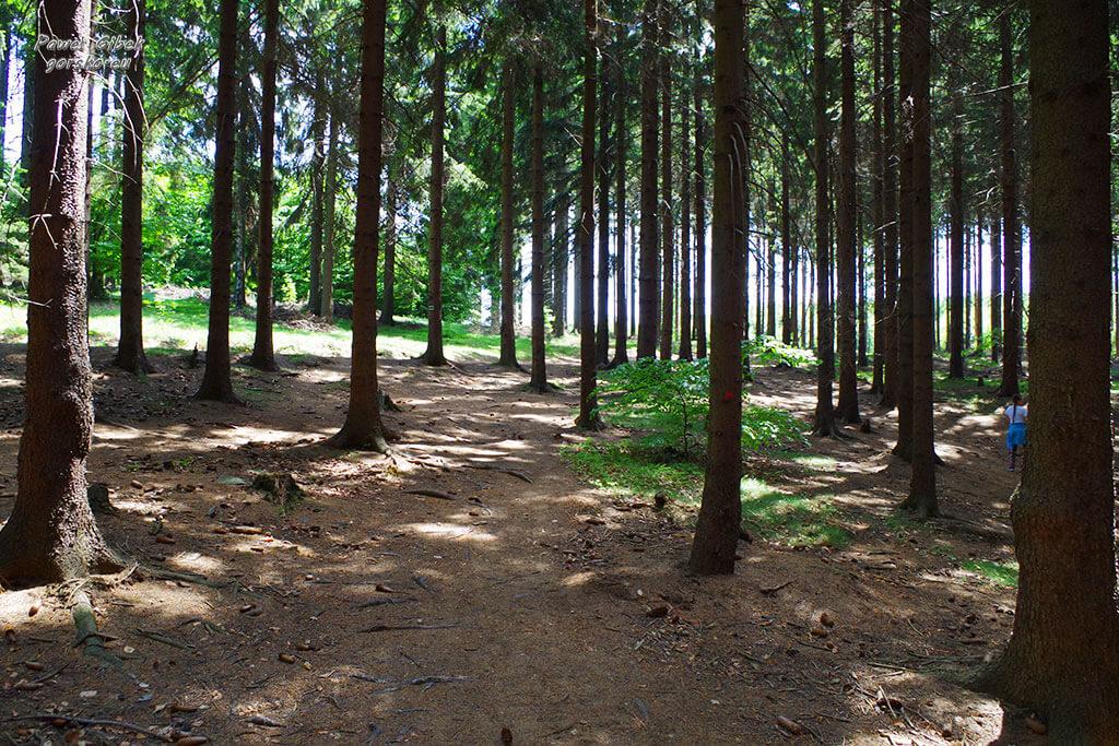 Las-przed-Zielonym-Jeziorkiem