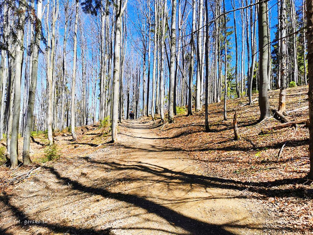 Wielka-Racza-Przełęcz-Przegibek-szlak-w-lesie