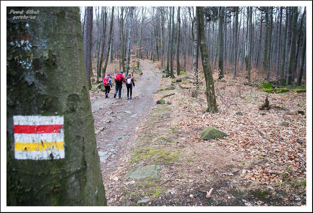 Ślęża-szlaki-Droga-przez-cały-czas-prowadzi-lasem
