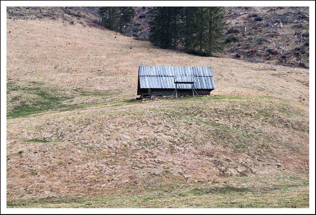 Krokusy-w-Tatrach.-Dolina-Lejowa-2