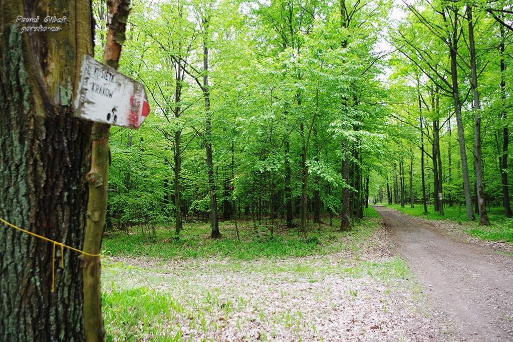 Rowerowy Szlak Orlich Gniazd. Las pomiędzy Częstochową, a Olsztynem