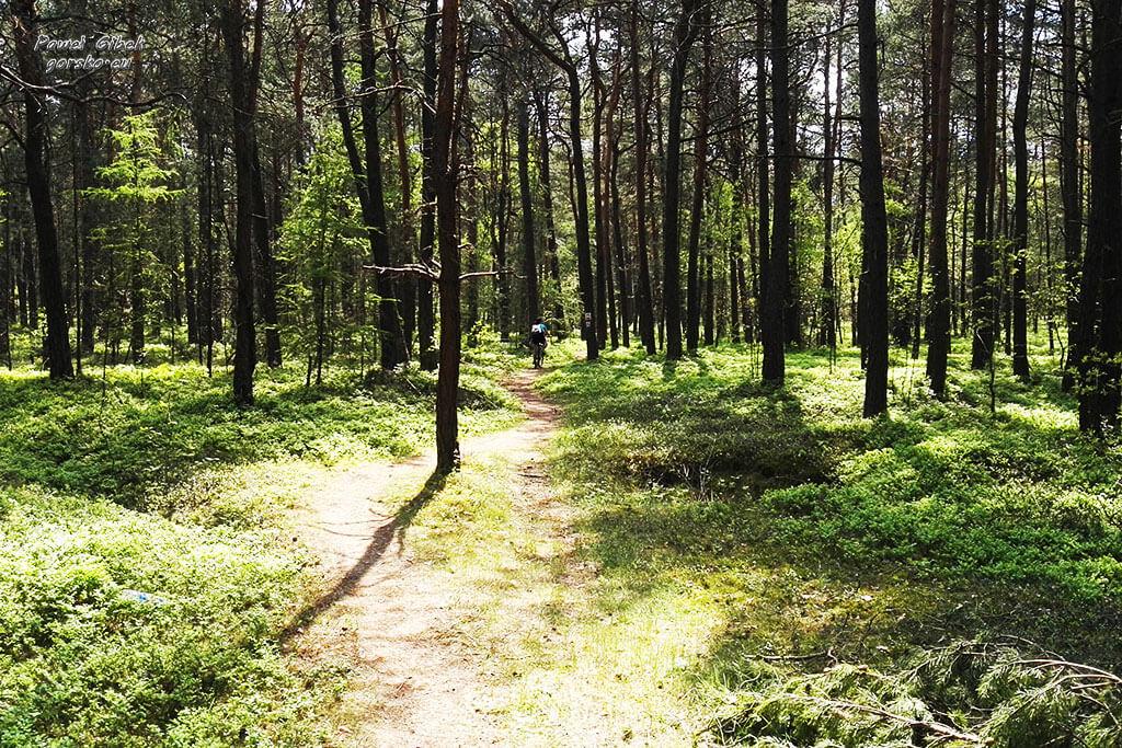 Szlak Orlich Gniazd rowerem. Leśna droga przed Jaroszowcem