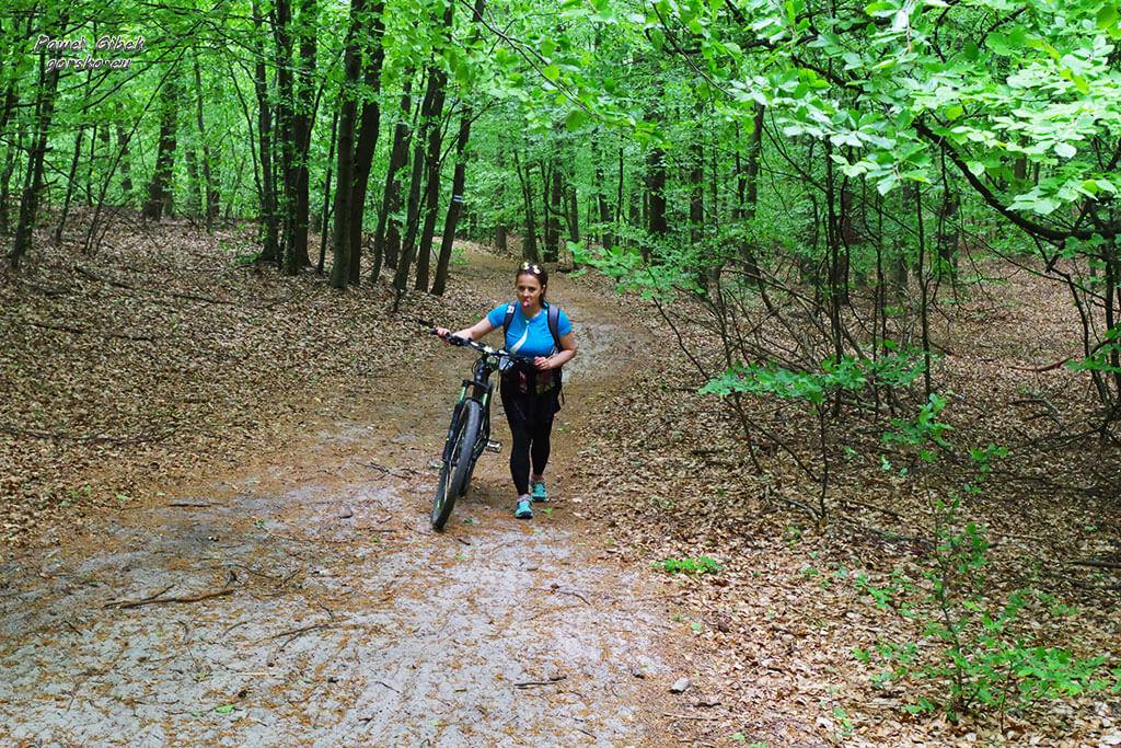 Rowerowy Szlak Orlich Gniazd. Leśna droga przed Zamkiem Bąkowiec