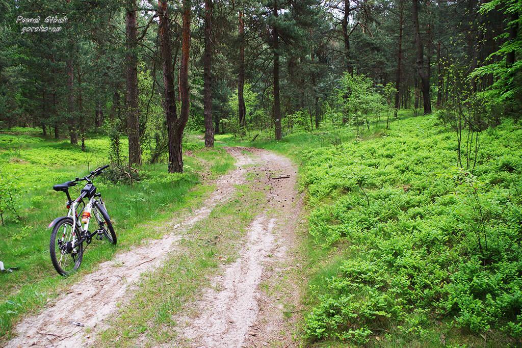 Rowerowy Szlak Orlich Gniazd. Po przejechaniu około 30 km