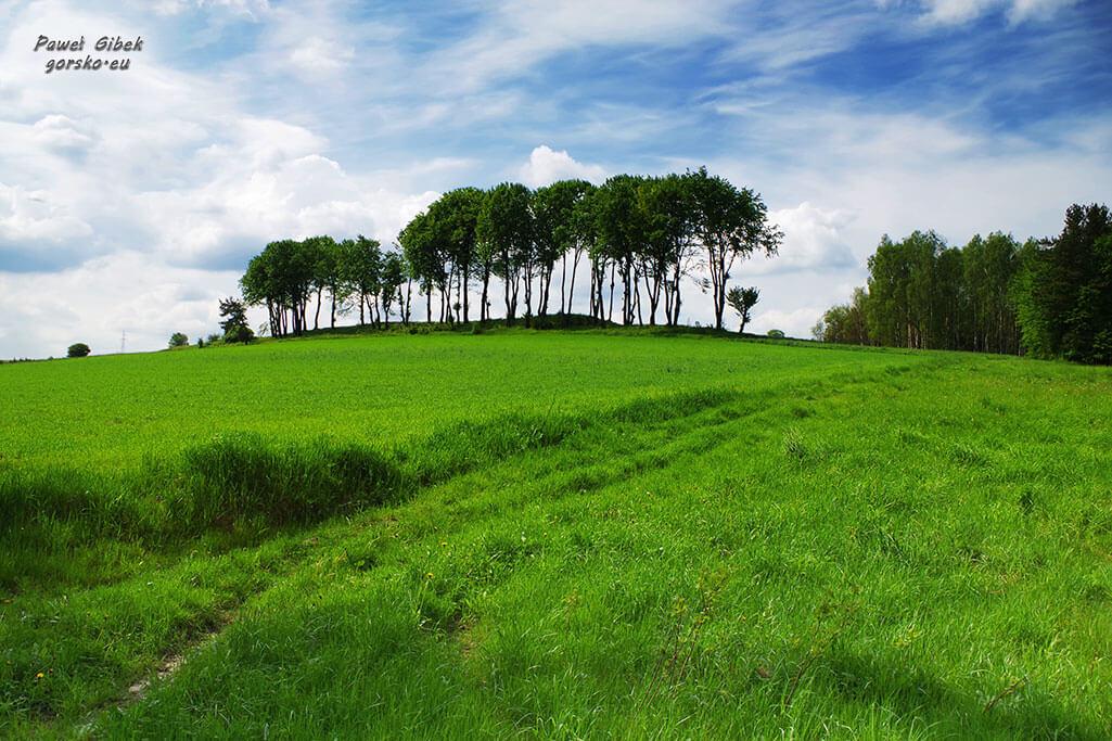 Szlak Orlich Gniazd rowerem. Wzgórze przy leśnej drodze, niedaleko przed zamkiem w Rabsztynie